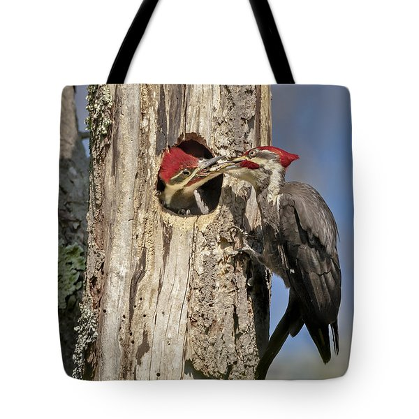 Pileated Woodpecker and Chick Tote Bag by Susan Candelario