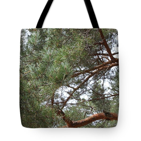 Pine Branches Tote Bag by Evgeny Pisarev