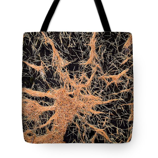 Pine Needles Tote Bag by Tim Hester