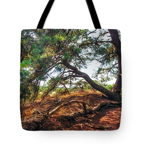 Pine Tree In Hoge Veluwe National Park 2. Netherlands Tote Bag by Jenny Rainbow