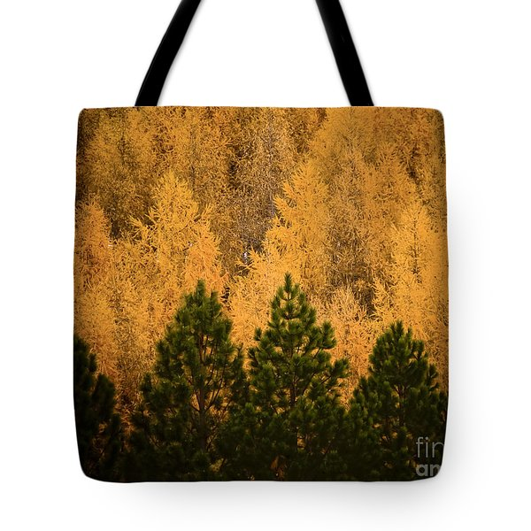 Pine Trees Tote Bag by Tim Hester