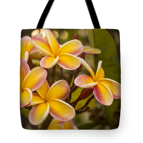 Pink and Yellow Plumeria 2 Tote Bag by Brian Harig