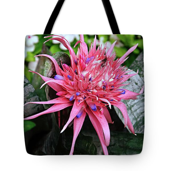 Pink Bromeliad Tote Bag by Andee Design