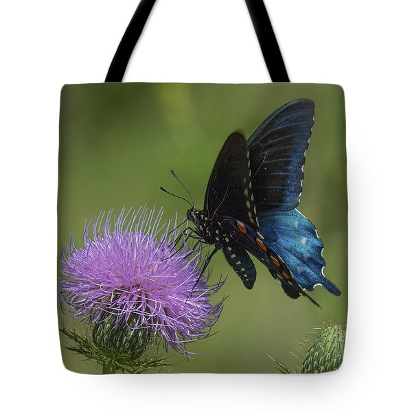 Pipevine Swallowtail Visiting Field Thistle Din158 Tote Bag by Gerry Gantt