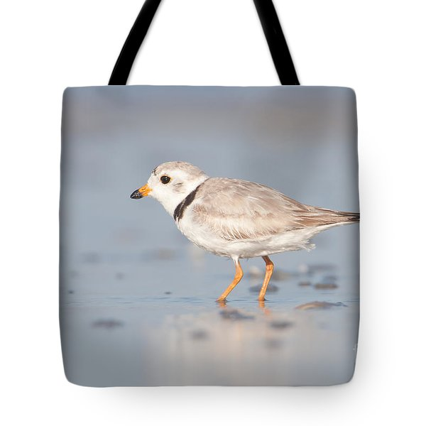 Piping Plover II Tote Bag by Clarence Holmes