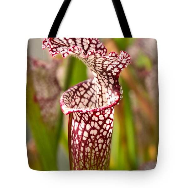 Plant - Pretty as a pitcher plant Tote Bag by Mike Savad