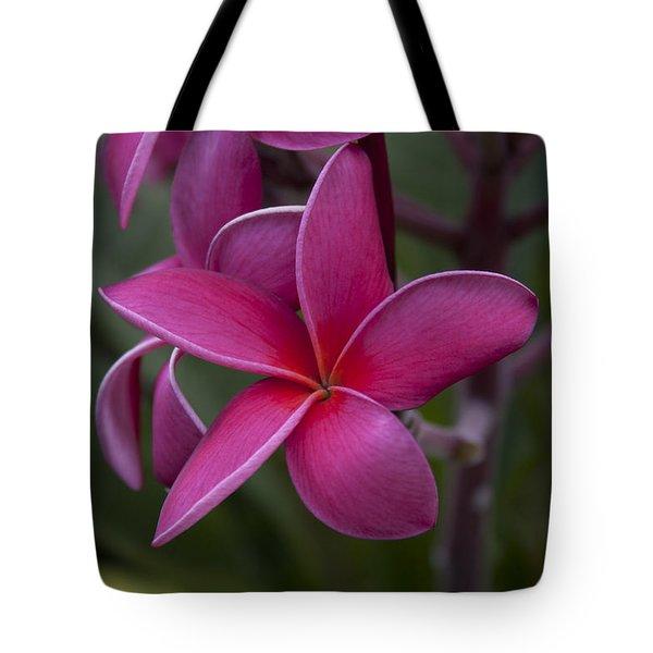 Plumeria Tote Bag by Randy Bayne