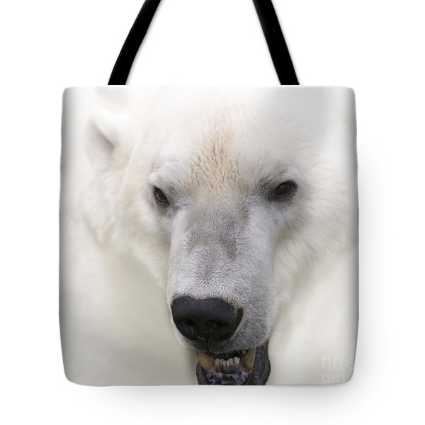 Polar Bear Portrait Tote Bag by Heiko Koehrer-Wagner