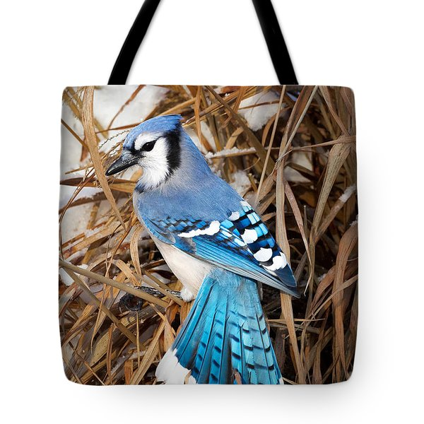 Portrait Of A Blue Jay Tote Bag by Bill Wakeley