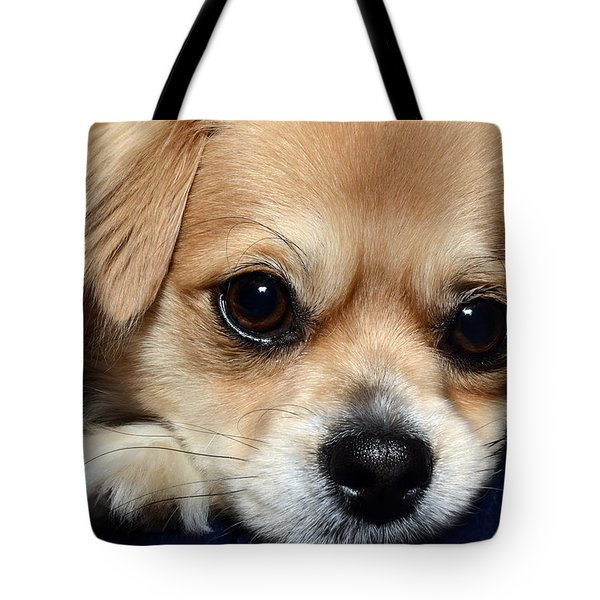Portrait Of A Pup Tote Bag by Lisa Knechtel