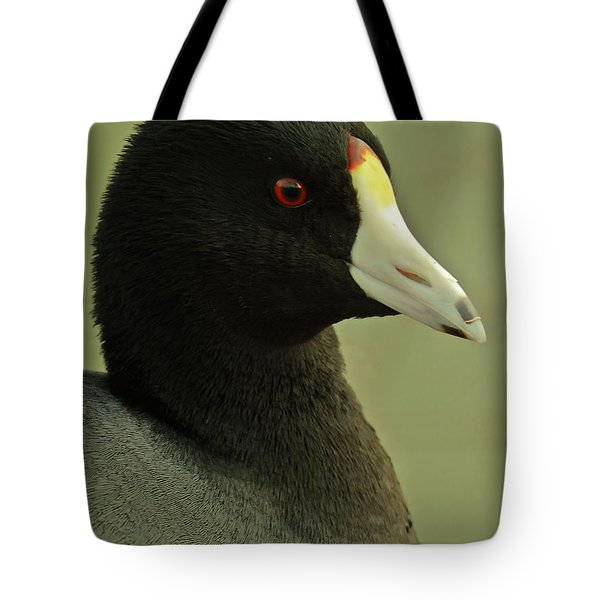 Portrait Of An American Coot Tote Bag by Robert Frederick