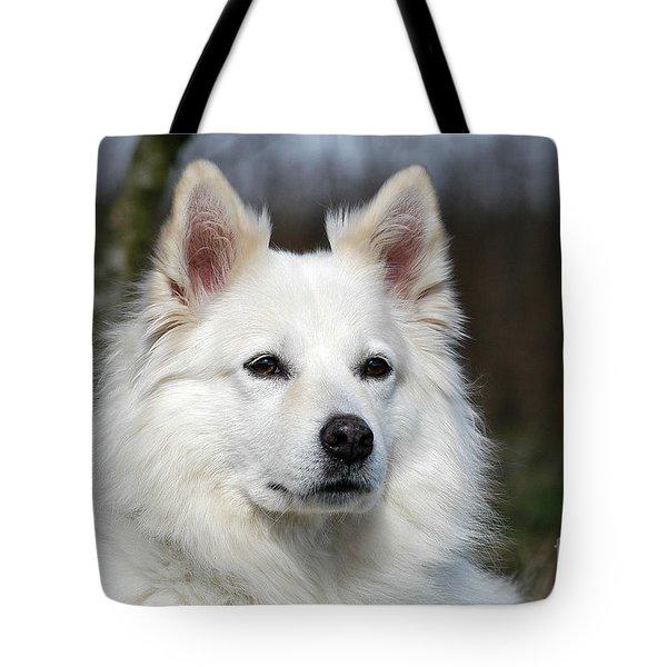 Portrait White Samoyed Dog Tote Bag by Dog Photos