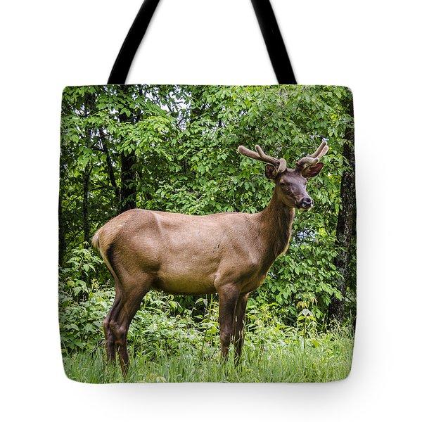 Posing Tote Bag by Carolyn Marshall