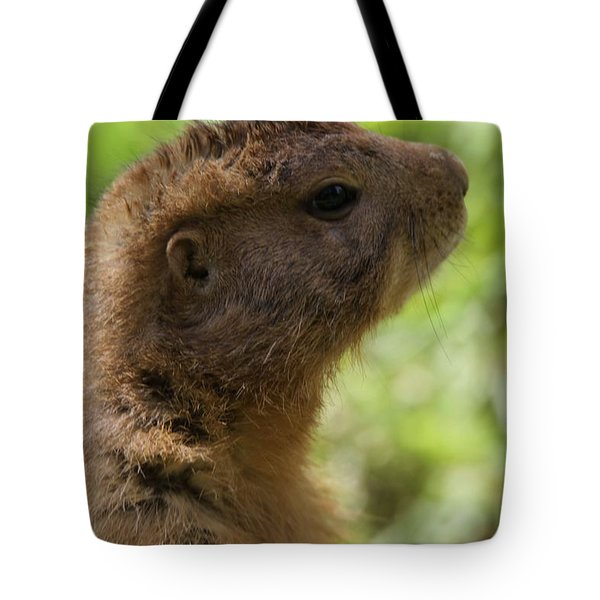 Prairie Dog Portrait Tote Bag by Dan Sproul