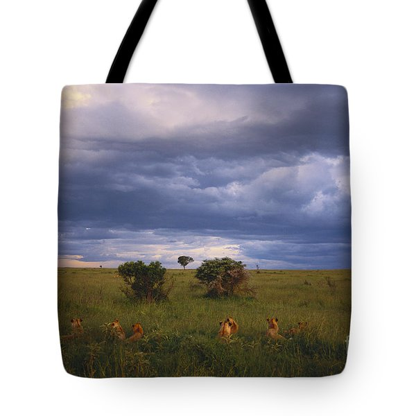 Pride Of Lions Tote Bag by Art Wolfe