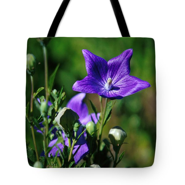 Purple Balloon Flower Tote Bag by Anonymous