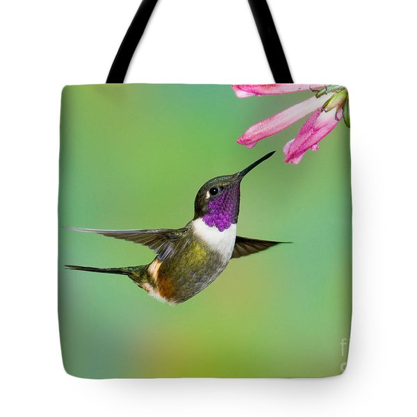Purple-throated Woodstar Tote Bag by Anthony Mercieca