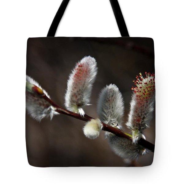 Pussy Willows Tote Bag by John Haldane