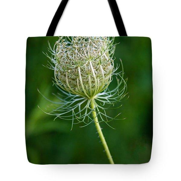 Queen Anne's Lace 2 Tote Bag by Steve Harrington