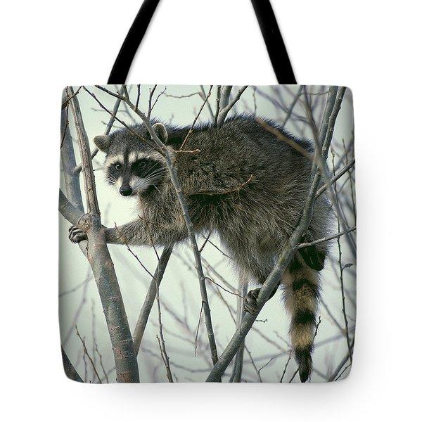 Up A Tree Tote Bag by Ellen Henneke