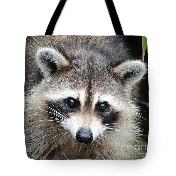 Raccoon Eyes Tote Bag by Carol Groenen