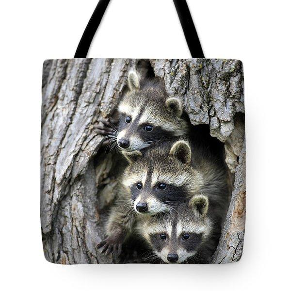 Raccoon Trio At Den Minnesota Tote Bag by Jurgen & Christine Sohns