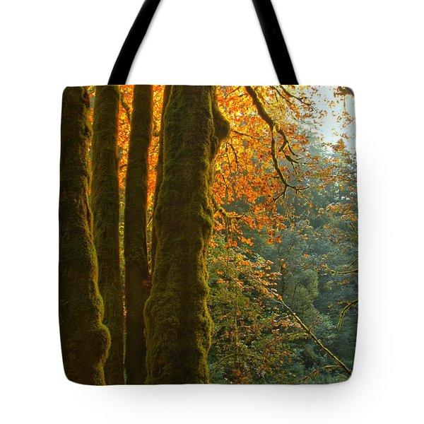 Rainforest Orange Tote Bag by Adam Jewell
