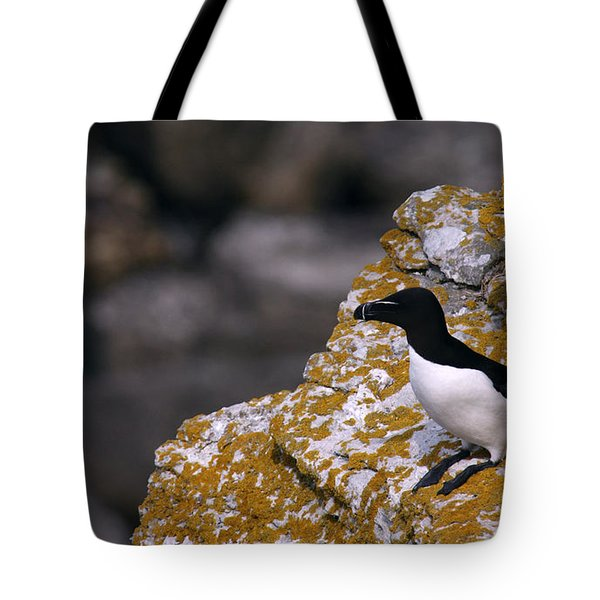 Razorbill Bird Tote Bag by Dreamland Media