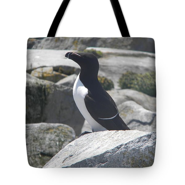 Razorbill Tote Bag by James Petersen