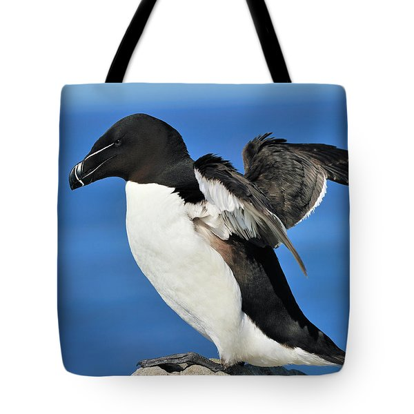 Razorbill Tote Bag by Tony Beck