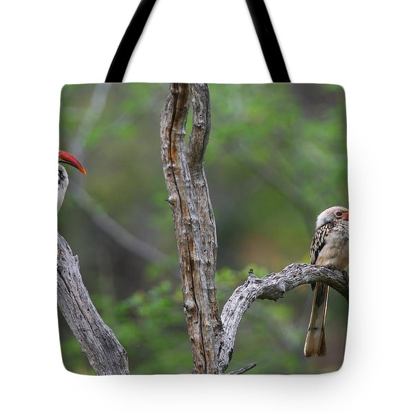 Red-billed Hornbills Tote Bag by Bruce J Robinson