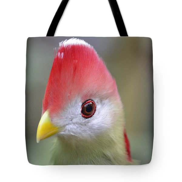 Red Crested Turaco Tote Bag by Richard Bryce and Family