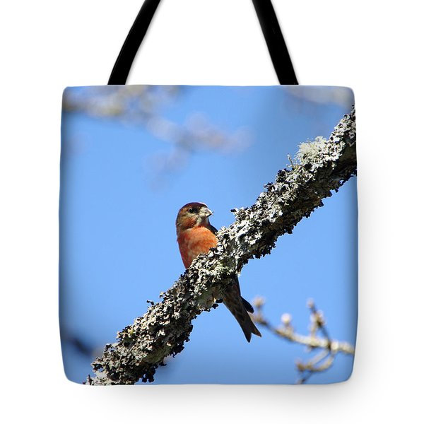 Red Crossbill Finch Tote Bag by Marilyn Wilson