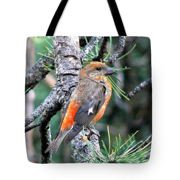 Red Crossbill On Pine Tree Tote Bag by Marilyn Burton