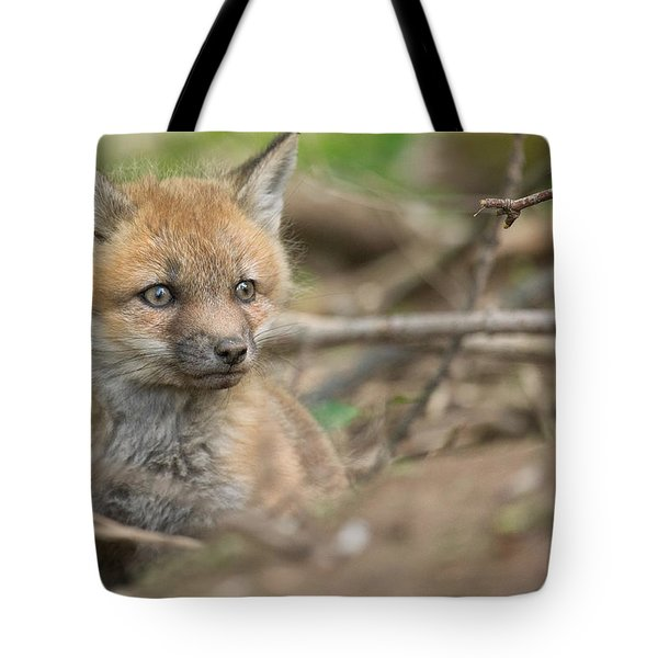 Red Fox Kit Tote Bag by Everet Regal