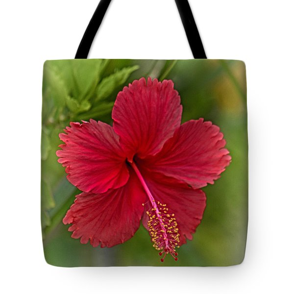 Red Hibiscus Tote Bag by Wendy Townrow