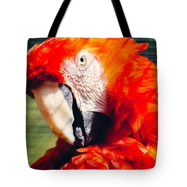Red Macaw Closeup Tote Bag by Pati Photography