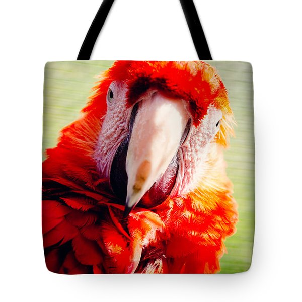 Red Macaw Tote Bag by Pati Photography
