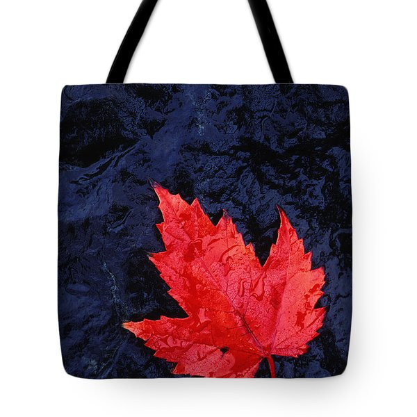 Red Maple Leaf And Black Stone - Fs000222 Tote Bag by Daniel Dempster