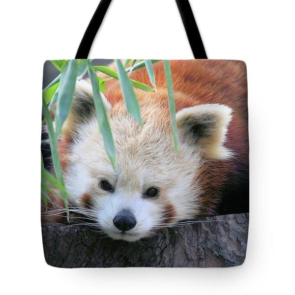 Red Panda Tote Bag by Karol Livote