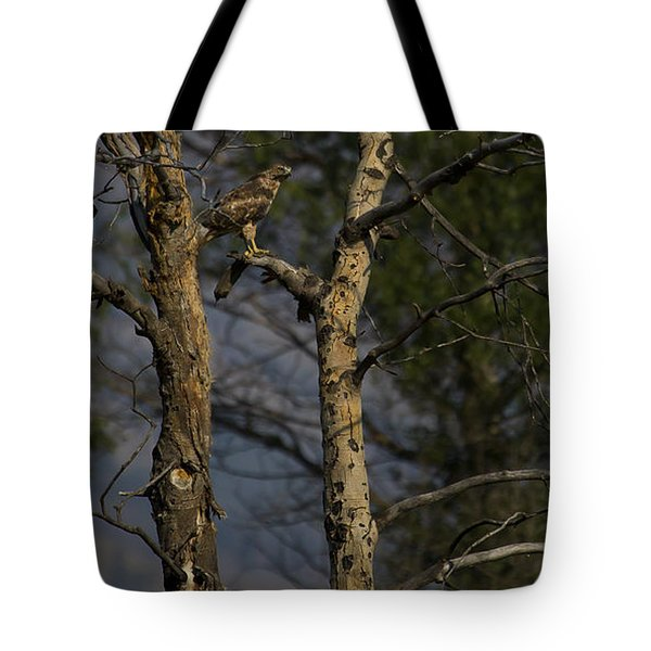 Red-tail Hawk   #0596 Tote Bag by J L Woody Wooden