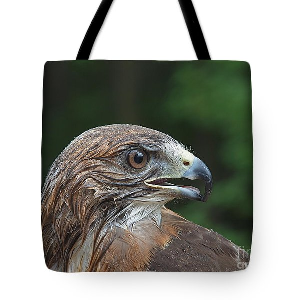 Red Tail Hawk Rain Tote Bag by Peter Gray