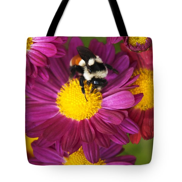 Red-tailed Bumble Bee Tote Bag by Christina Rollo