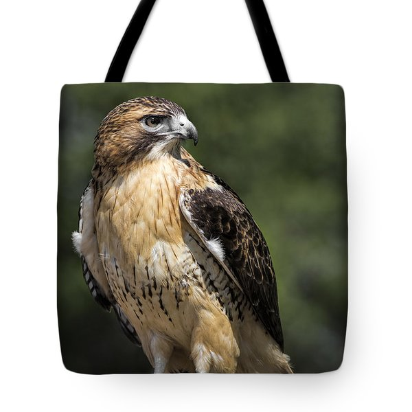 Red Tailed Hawk Tote Bag by Dale Kincaid