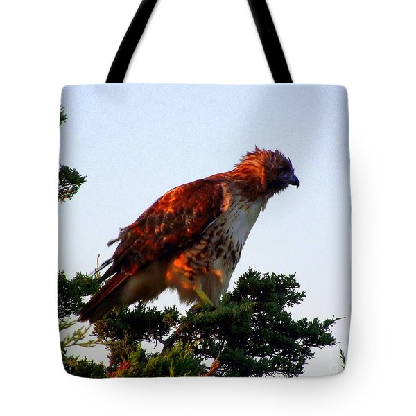 Red-tailed Hawk Fluff Up Tote Bag by CapeScapes Fine Art Photography