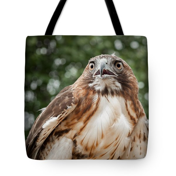 Red-Tailed Hawk Square Tote Bag by Bill  Wakeley