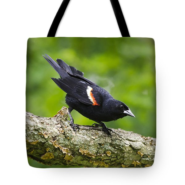Red-winged Blackbird Tote Bag by Christina Rollo