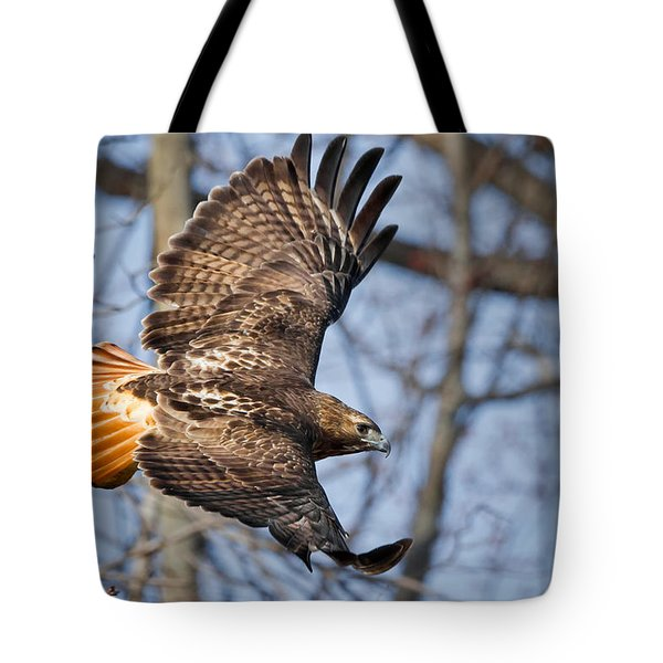 Redtail Hawk Tote Bag by Bill Wakeley