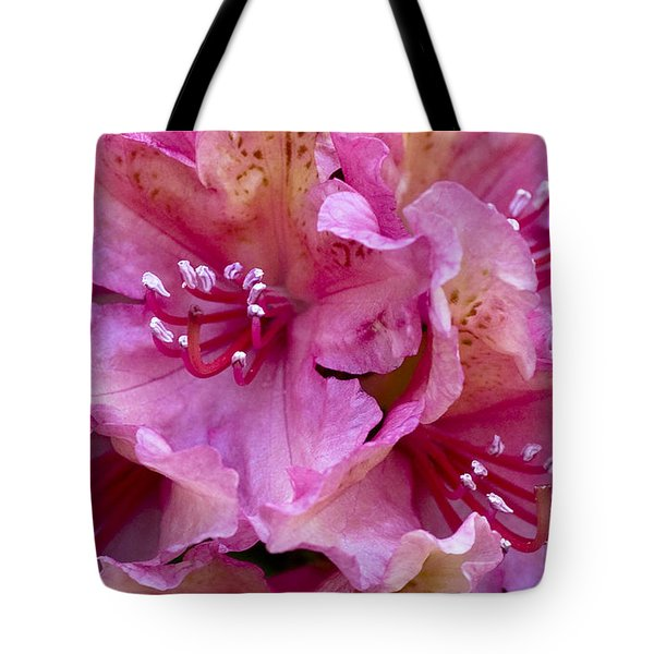 Rhododendron Brasilia Tote Bag by Frank Tschakert