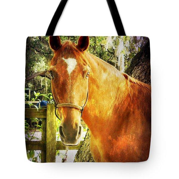Romeo Tote Bag by Judy Hall-Folde